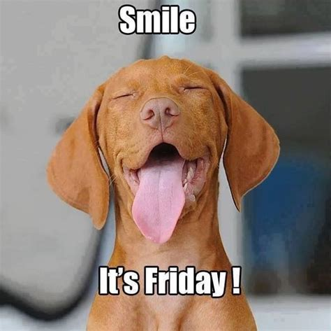 Happy Friday Memes - 25 best ideas about happy friday meme on pinterest its