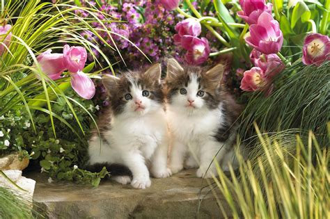 beautiful kittens all wallpapers beautiful cats hd wallpapers