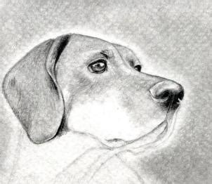 imagenes de un animal how to draw a dog head dog head step by step realistic