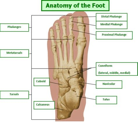 Planter Of Foot by Orthotics And Insoles The Simple Solution To Foot Free Consultation