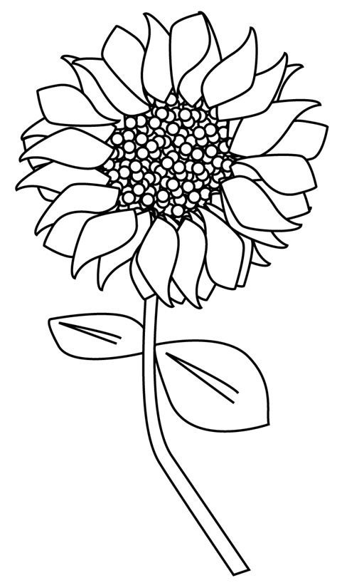 Outline Of Sunflower To Colour by Best Photos Of Sunflower Outline Printable Free Printable Sunflower Template Printable