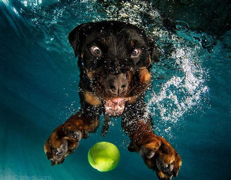 puppies underwater jump in the pool and giggle uncontrollably with underwater dogs mnn
