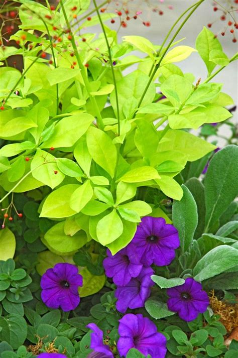 perennial flowers for shade fresh friday perennials for the shade yard dreams