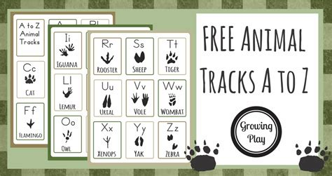printable animal tracks flashcards animal track flashcards from a to z growing play