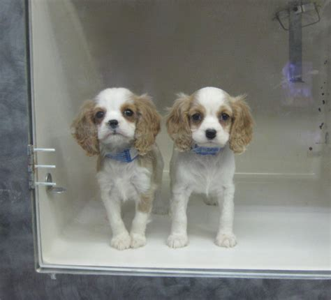 puppies store pet stores dahna bender