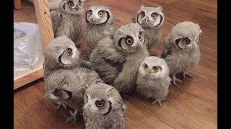 Setelan Baby Pay Owl baby owls 3