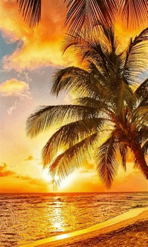 Live Palm Tree Wallpaper by Free Golden Weather Live Wallpaper Apk For