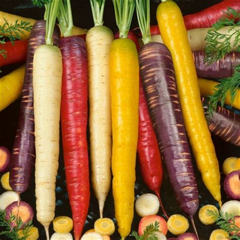 Harga Bibit Wortel bibit wortel rainbow wortel pelangi