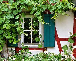 Kletterpflanze Balkon Sonnig Winterhart by Kletterpflanzen Als Sichtschutz Sonne Schatten