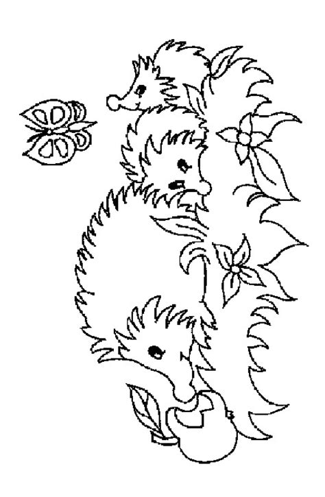 baby hedgehog coloring page hedgie babies hedgehog pages color book