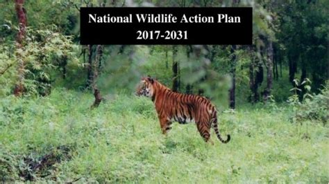 School Of Wildlife Mba by India Unveils 3rd National Wildlife Plan For 2017 2031