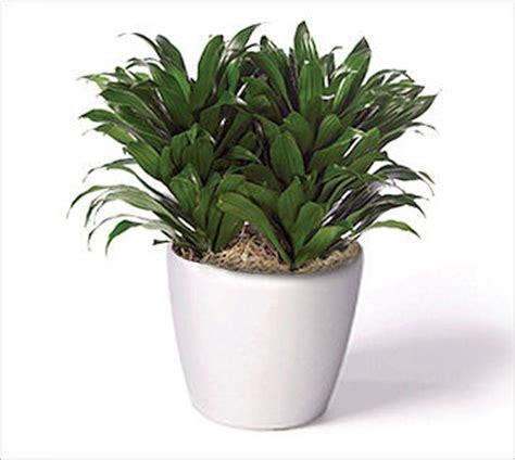 office plant the ultimate guide to office plants