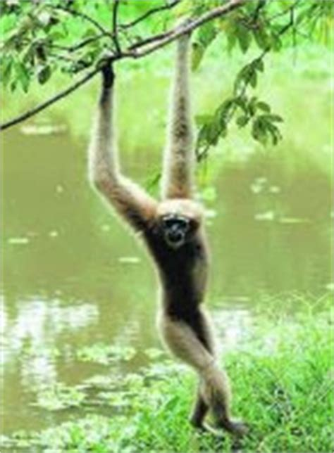 biodiversity  fauna   northeast india