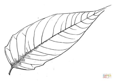 ash leaf coloring page ash leaf coloring pages