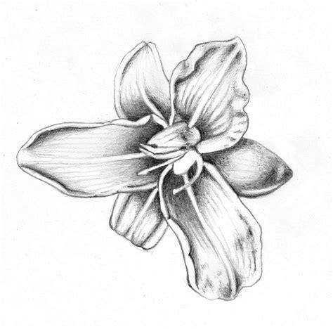 wallpaper flower draw flower drawings flowers wallpapers 16 free hd