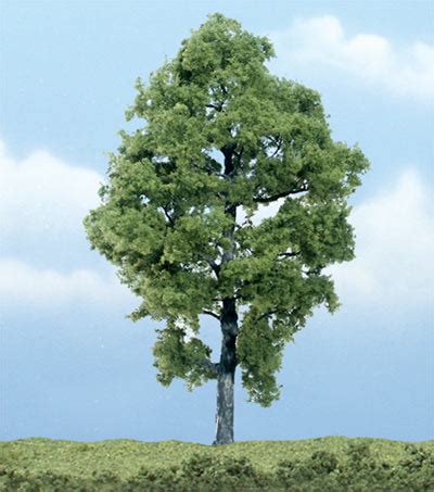 a picture of tree hickory tree pictures