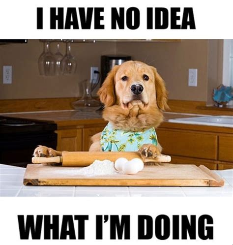 I Have No Idea What Im Doing Meme - our top 10 best dog memes ever dogs and puppies