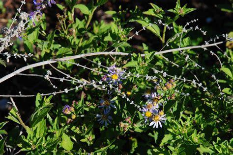 plants for conditions a garden diary drought tolerant perennials