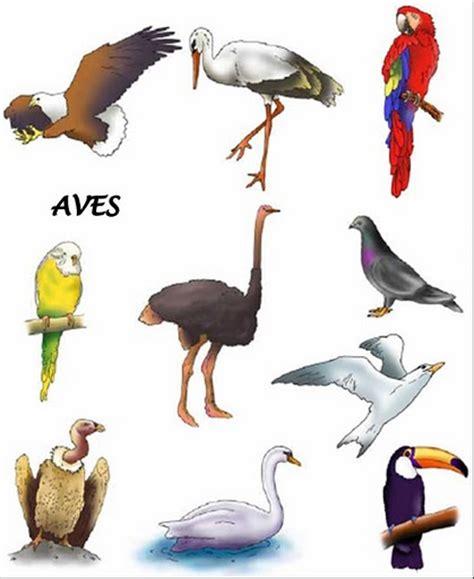 imagenes animales aves im 225 genes de verduras frutas y animales lengua de signos
