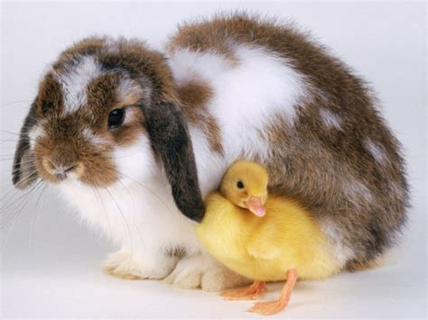 house pets animals