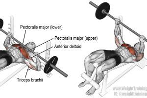 flat barbell pyramid bench 17 best ideas about bench press on pinterest bench press