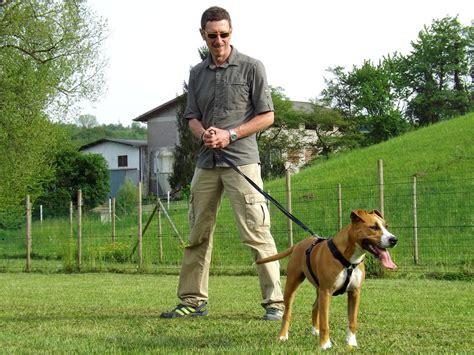 portare il al guinzaglio 10 consigli per una pacifica convivenza nell area cani