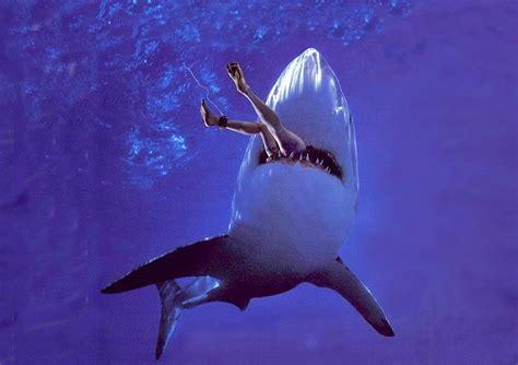 2015 beach shark attack predictable fatal shark attack on reunion island