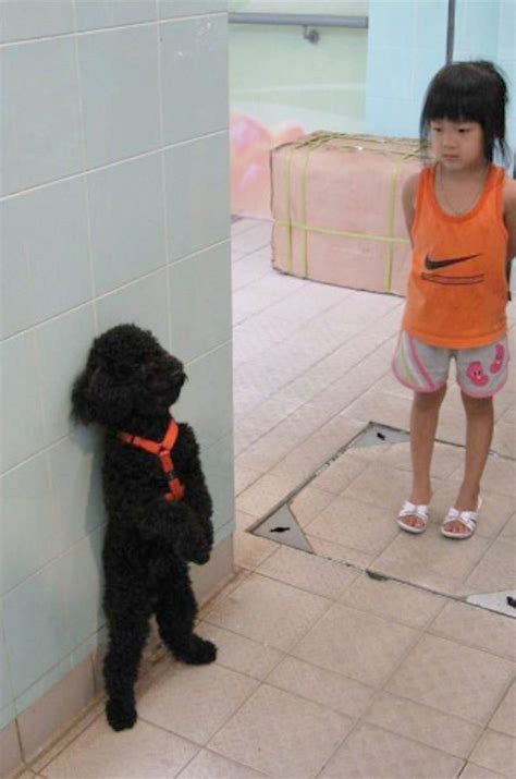 lets give  standing ovation   awkwardly standing dogs