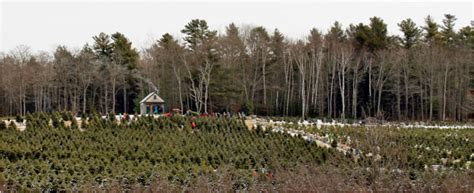 visit a maine christmas tree farm visit mainevisit maine
