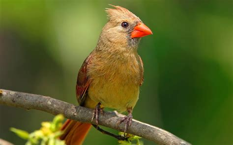 birds pictures birds in forest latest pictures best wallpapers 2012