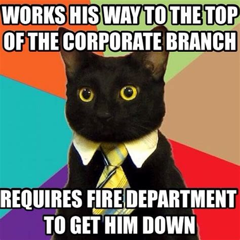 Working Cat Meme - workplace lulz when your career is one big cat meme