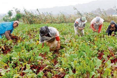 imagenes agricultura maya prestamos para agricultura en guatemala prestamos