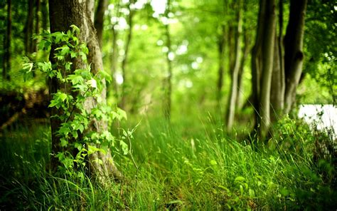 forest wallpapers hd   fun