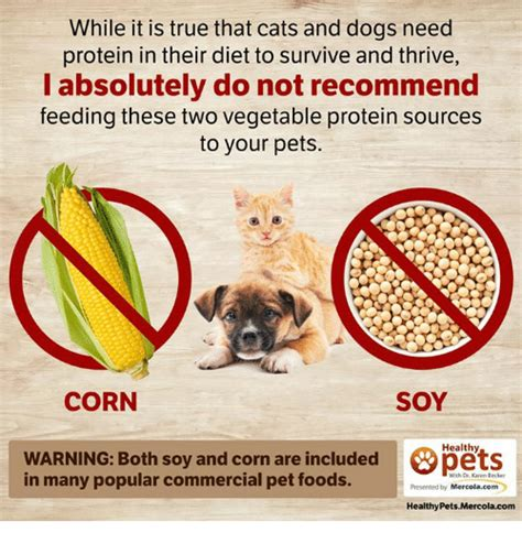 unusual sources of protein in cat and dog foods 25 best memes about dieting and food dieting and food memes