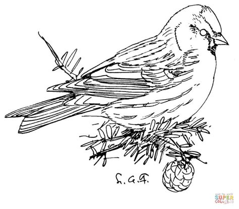 common loon coloring page sketch coloring page