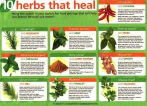 herbs chart 10 herbs that heal health anti aging wellness