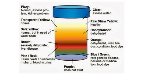 phenazopyridine urine color what color of your urine reveals about your health