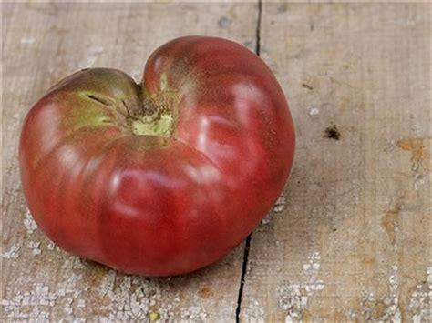 Benih Biji Cherry Ungu Import Korea benih tomat import berbagai jenis fresh nature