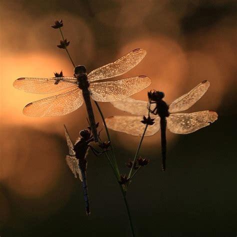 celebrity bytes meaning dragonfly nails lib 233 lulas my nails 101 fashion fab