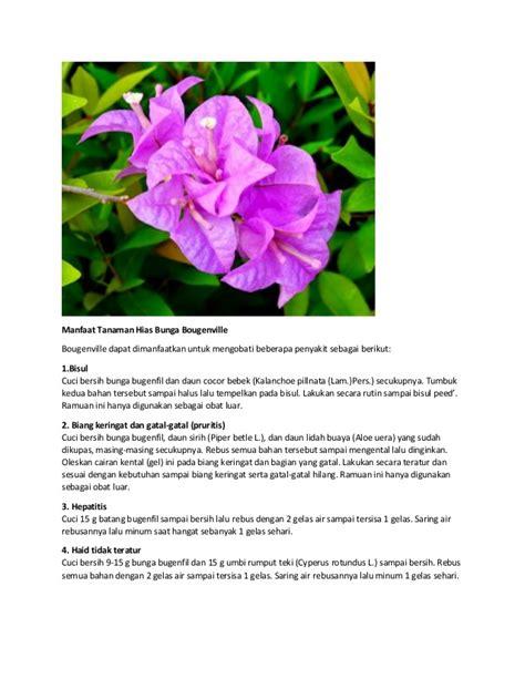 manfaat tanaman hias bunga bougenville