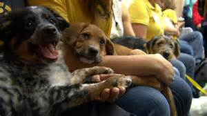 adopt puppy bowl dogs puppy bowl 2016 12th annual bowl alternative raises awareness about adoption