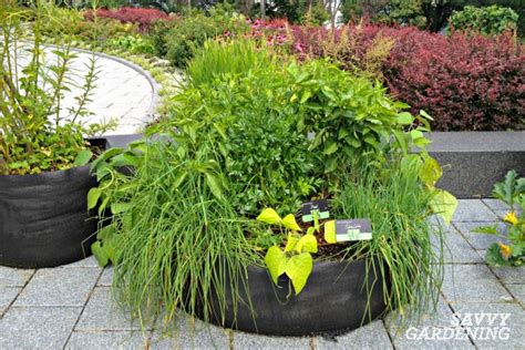 grows herbs and plants with smart herb garden in your growing a culinary herb garden offers fresh homegrown flavor