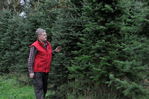 jeff gilbert owner of woods farm christmas trees in