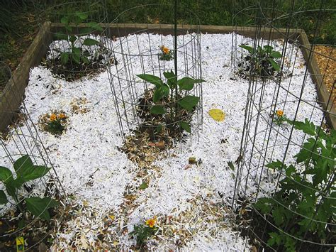 How To Make Paper Mulch - fluffy flowers out walking