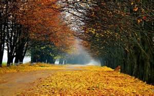 fall landscape autumn forest landscape wallpaper 1206794