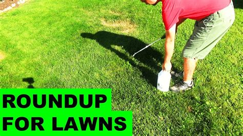 roundup for lawns roundup for lawns before after review