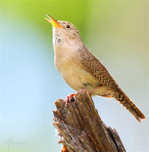 sunday showcase birds of south glenmore park birds calgary