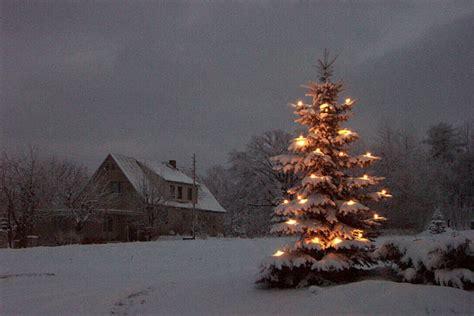 leuchtender weihnachtsbaum my blog