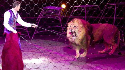 el domador de leones 8416087407 video domador es atacado por un le 243 n frente a ni 241 os aterrados elsalvador com