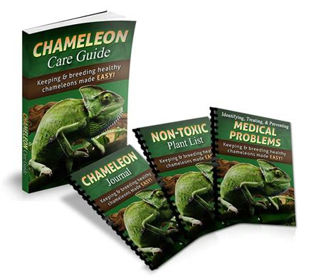 you are one in a chameleon books chameleon care guide keeping and healthy